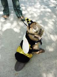 beever